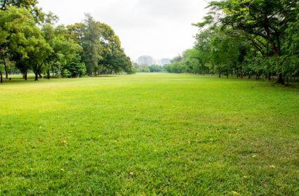 Realizzazione di giardini all'inglese