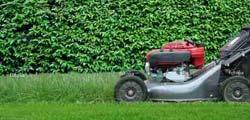 Gocciaverde giardini realizza interventi di potatura per un giardino perfetto